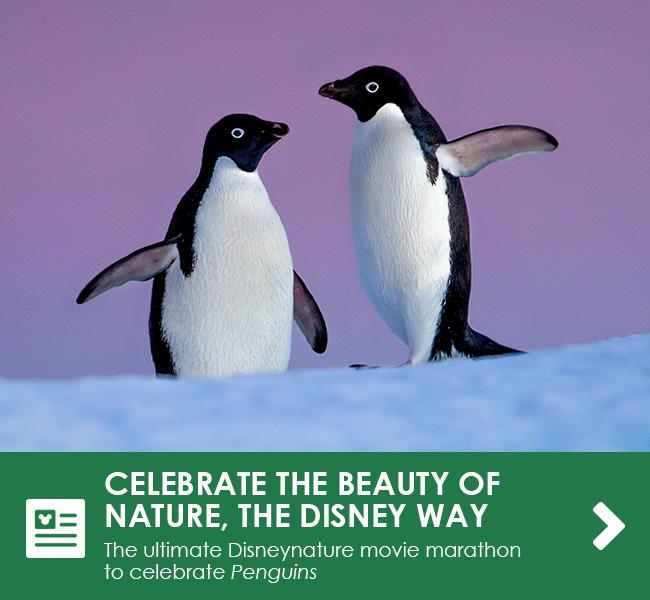 CELEBRATE THE BEAUTY OF NATURE THE DISNEY WAY - The ultimate Disneynature movie marathon to celebrate Penguins